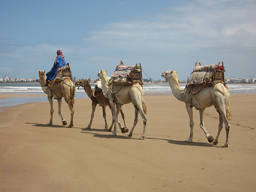 In Morocco: Camel Trekking in the Desert