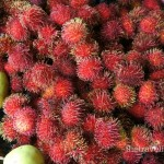 red spikey rambutan fruit, Costa Rica